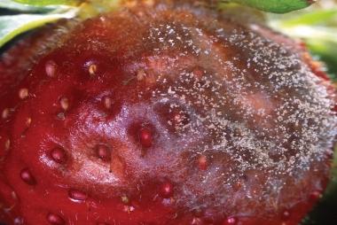 Fungistop-3