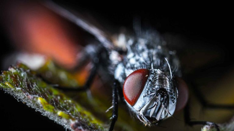 Rid Your Farm From Pests With Reliable Midge Flies Control